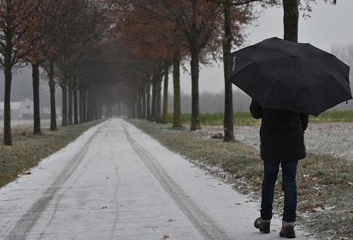 雨の日 ミミズ なぜ 道路