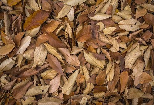 ミミズ 堆肥 生ゴミ 落ち葉 コーヒー