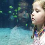 理由と対策が知りたい、熱帯魚がいる水槽に大量発生するミミズ