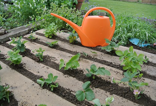 庭 畑 ミミズ 増やす 方法