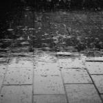 雨にミミズが大量発生する原因とは