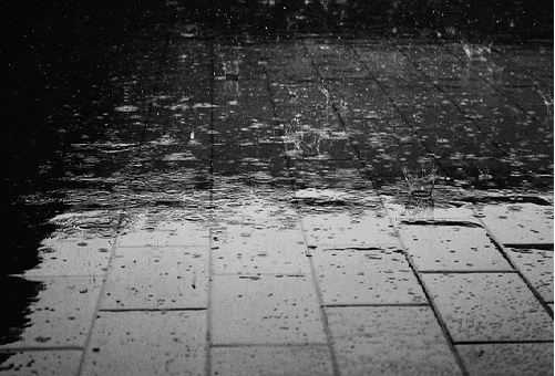 雨 ミミズ 大量発生 原因