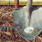 土を掘っているとちぎれてしまうミミズ。本当に再生するの?ミミズの再生と繁殖方法