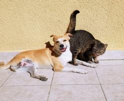 犬 猫 ミミズ 寄生虫