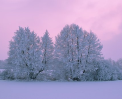 ミミズ 冬 冬眠