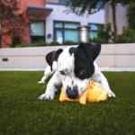 犬に寄生するミミズに似た虫。ミミズとの分類上の違い