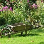 畑や花壇、庭にいるミミズの種類