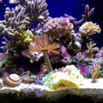 ブリや熱帯魚につくミミズのような寄生虫とは?