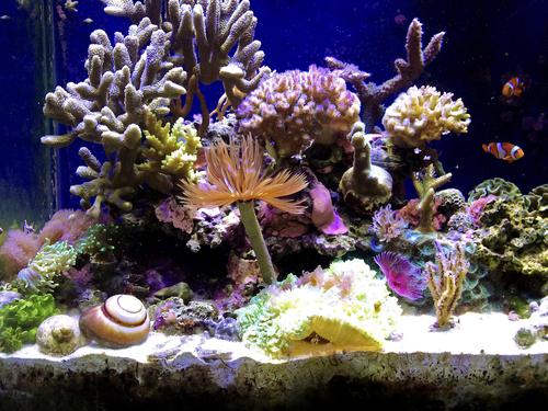 ブリ 熱帯魚 ミミズ 寄生虫