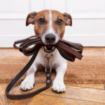 犬便とミミズの関係