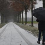雨の日ミミズはなぜ道路にたくさんいるの?