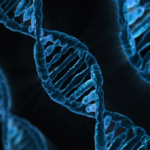 人間とミミズの遺伝子について