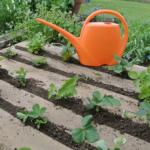 庭や畑に住んでいるミミズを増やす方法とは?