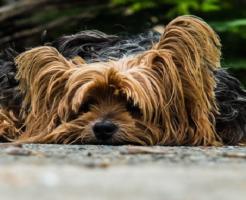 食べる 犬 なぜ ミミズ すりすり
