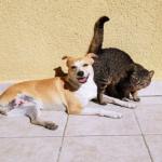犬や猫に寄生するミミズみたいな寄生虫