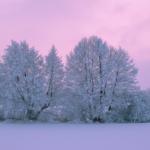 冬にミミズは冬眠する?