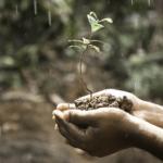 ミミズがたくさんいる土は栄養たっぷりの土??ミミズがもたらす効果について