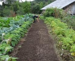 ミミズ 家庭菜園 土作り