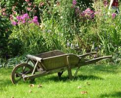 畑 花壇 庭 ミミズ 種類