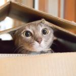 猫がミミズのようなものを吐くなら病院へ!